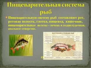 Пищеварительную систему рыб составляют рот, ротовая полость, глотка, пищевод,