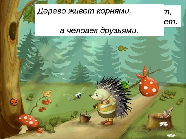 Весной веселит, летом холодит, Осенью питает, зимой согревает. Дерево живет к...