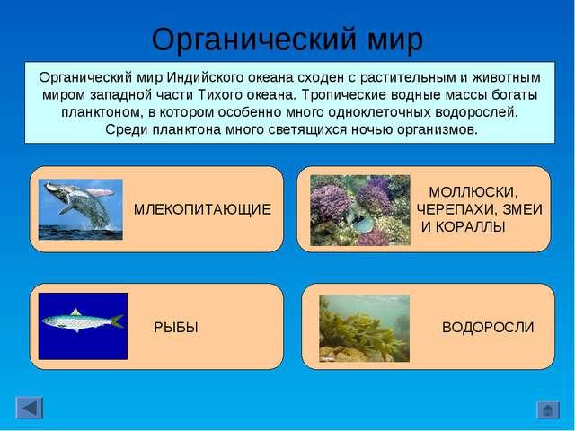Органический мир Органический мир Индийского океана сходен с растительным и ж...