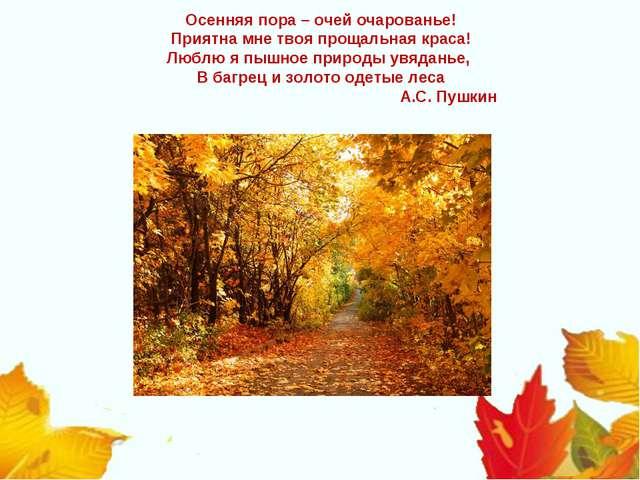 Осенняя пора – очей очарованье! Приятна мне твоя прощальная краса! Люблю я пы...