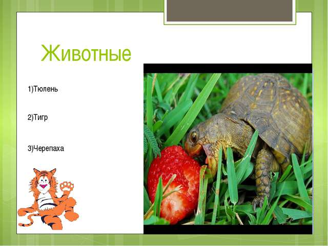 Животные 1)Тюлень 2)Тигр 3)Черепаха