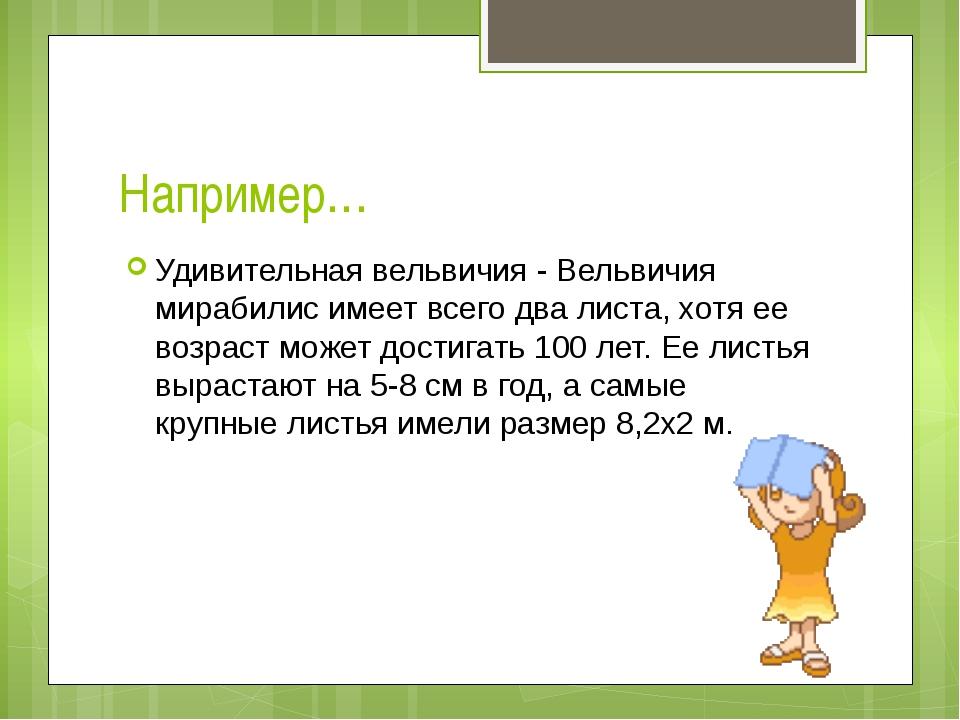 Например… Удивительная вельвичия - Вельвичия мирабилис имеет всего два листа,...