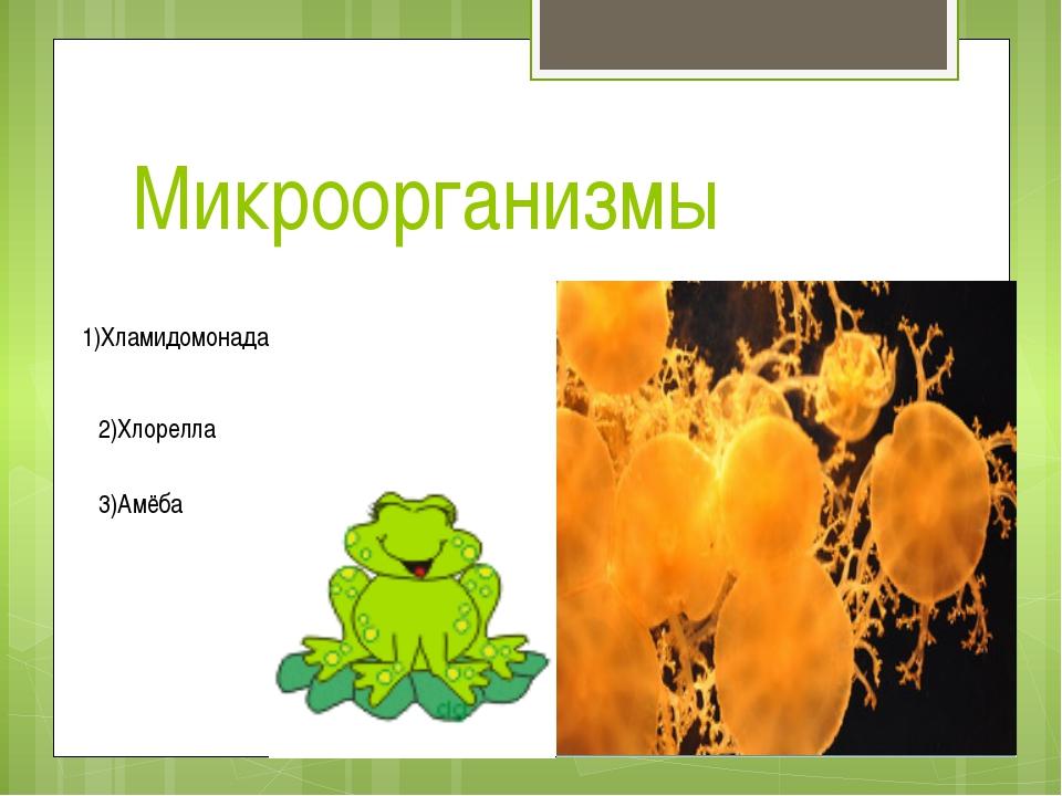 Микроорганизмы 1)Хламидомонада 2)Хлорелла 3)Амёба