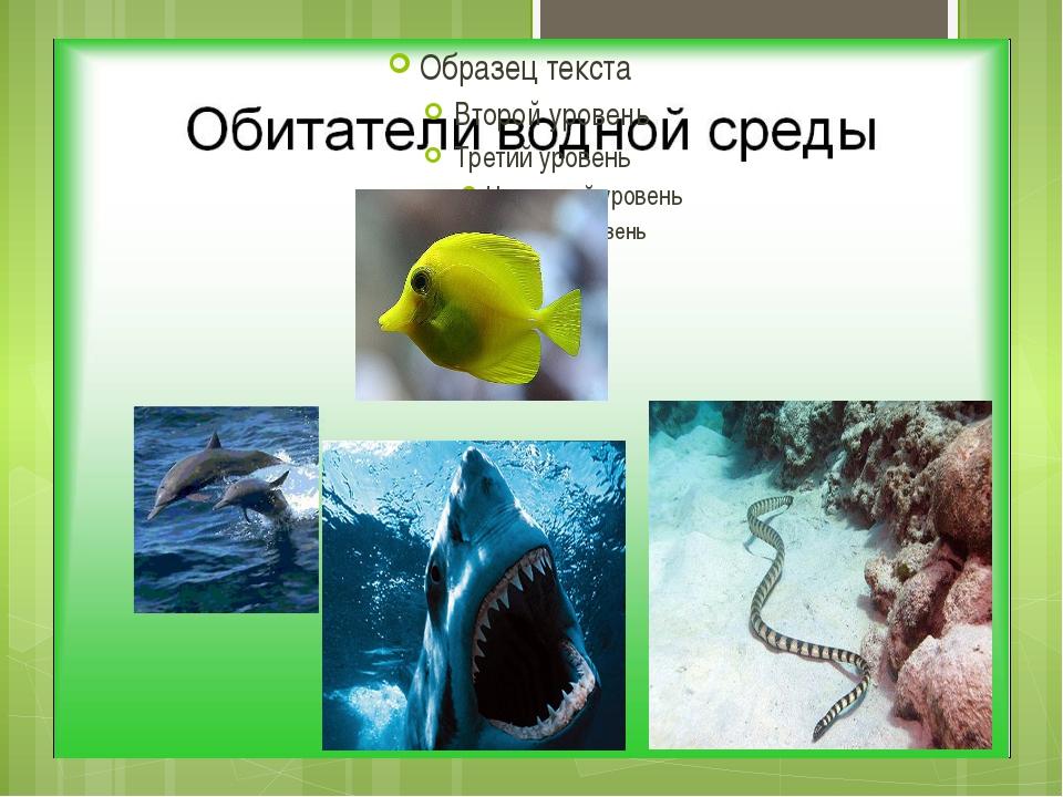 Примеры : кто живёт в водной среде