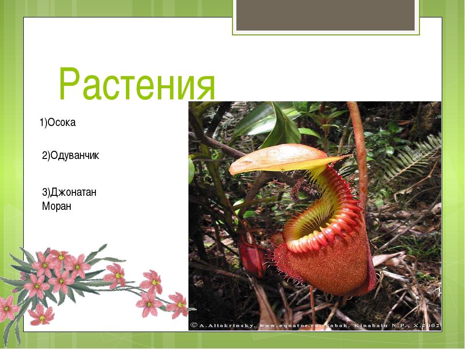 Растения 1)Осока 2)Одуванчик 3)Джонатан Моран