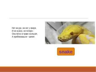 snake Нет ни рук, ни ног у зверя, И не нужно, не потеря - Она легко в траве