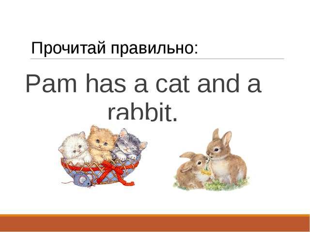 Прочитай правильно: Pam has a cat and a rabbit.