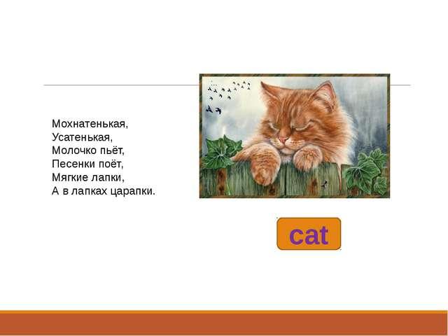 cat Мохнатенькая, Усатенькая, Молочко пьёт, Песенки поёт, Мягкие лапки,...