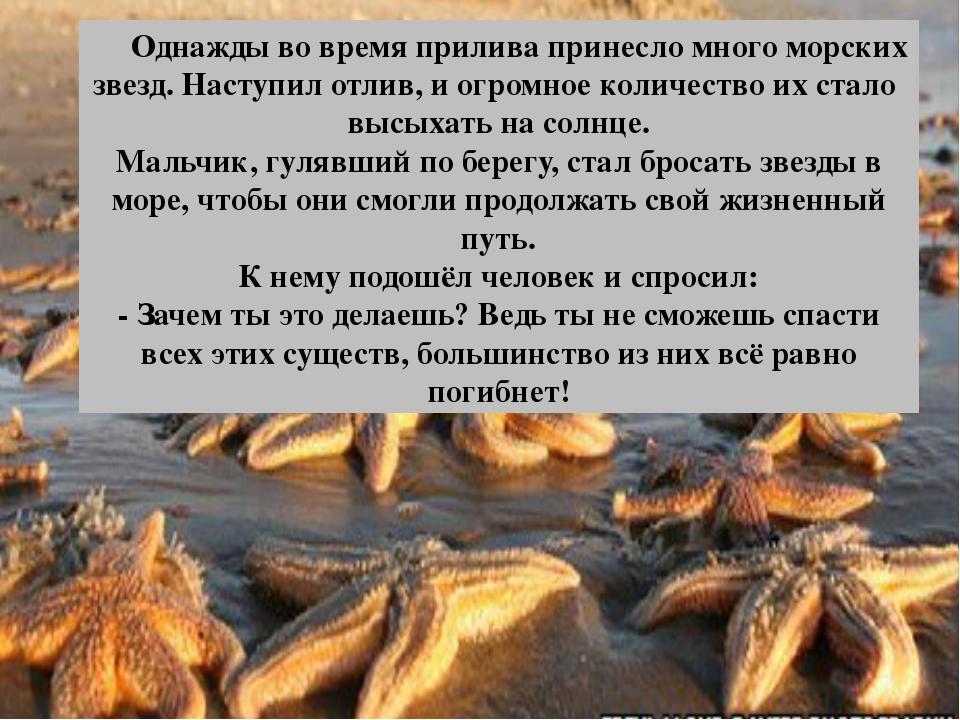 Однажды во время прилива принесло много морских звезд. Наступил отлив, и огр...
