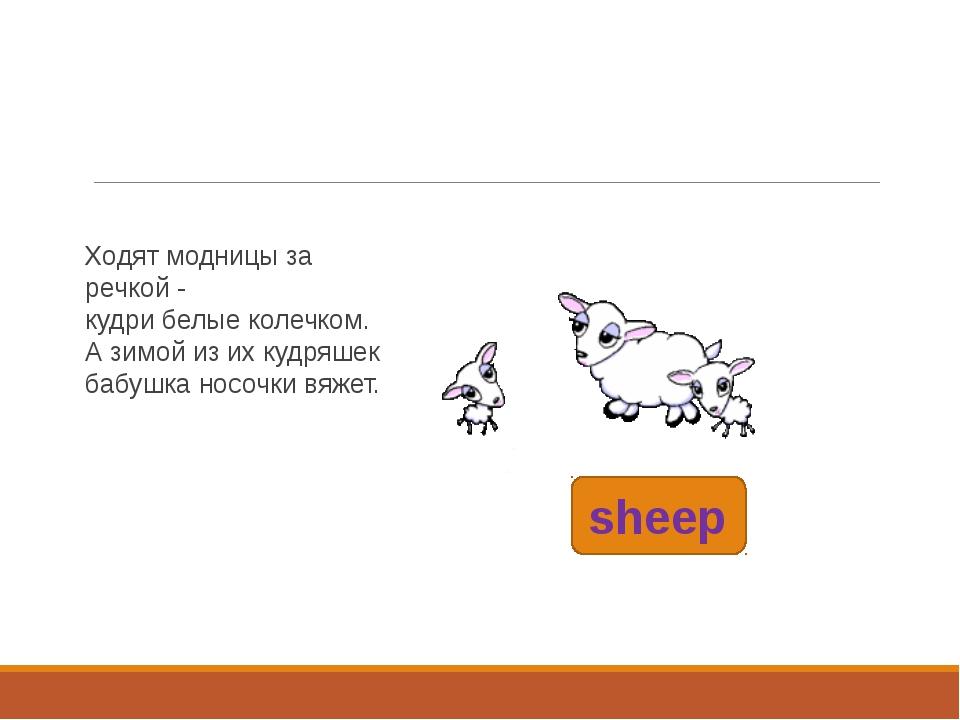 sheep Ходят модницы за речкой - кудри белые колечком. А зимой из их кудряшек...