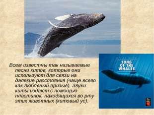 Всем известны так называемые песни китов, которые они используют для связи на