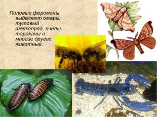 Половые феромоны выделяют омары, тутовый шелкопряд, пчелы, тараканы и многие