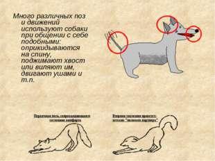 Много различных поз и движений используют собаки при общении с себе подобными