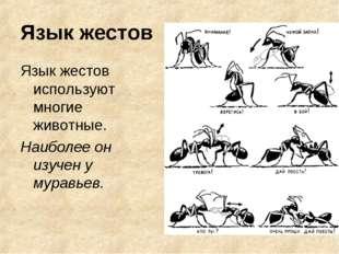 Язык жестов Язык жестов используют многие животные. Наиболее он изучен у мура