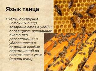 Язык танца Пчелы, обнаружив источник пищи, возвращаются в улей и оповещают ос
