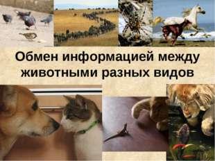 Обмен информацией между животными разных видов