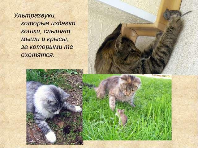 Ультразвуки, которые издают кошки, слышат мыши и крысы, за которыми те охотят...