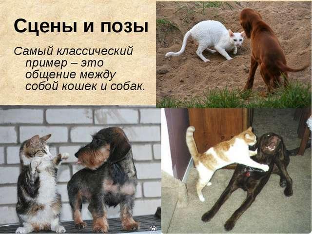 Сцены и позы Самый классический пример – это общение между собой кошек и собак.