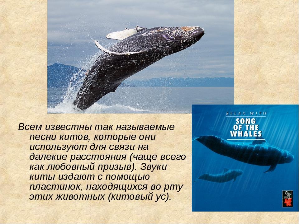 Всем известны так называемые песни китов, которые они используют для связи на...