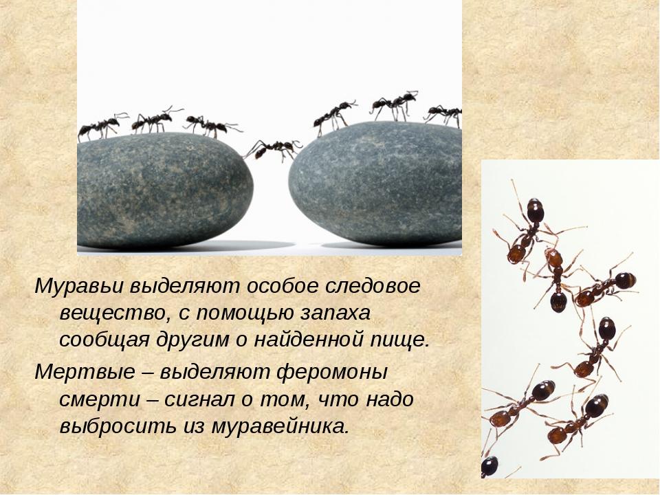 Муравьи выделяют особое следовое вещество, с помощью запаха сообщая другим о...
