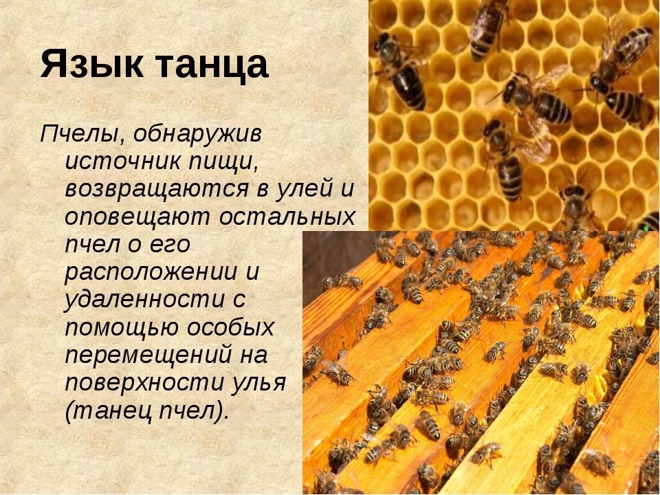 Язык танца Пчелы, обнаружив источник пищи, возвращаются в улей и оповещают ос...