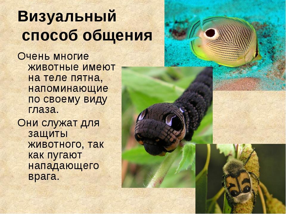 Визуальный способ общения Очень многие животные имеют на теле пятна, напомина...