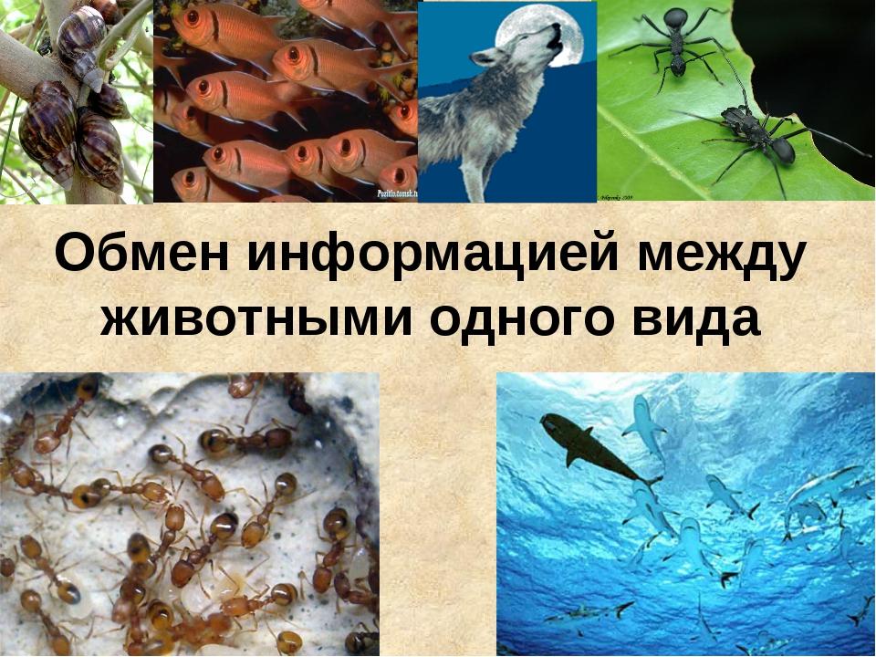 Обмен информацией между животными одного вида
