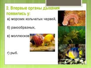 2. Впервые органы дыхания появились у: а) морских кольчатых червей,  б) ра