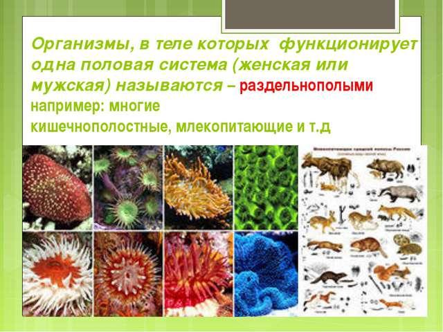 Организмы, в теле которых функционирует одна половая система (женская или му...