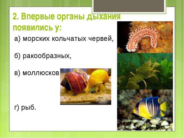 2. Впервые органы дыхания появились у: а) морских кольчатых червей,  б) ра...