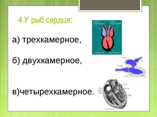 4 У рыб сердце: а) трехкамерное, б) двухкамерное,  в)четырехкамерное.