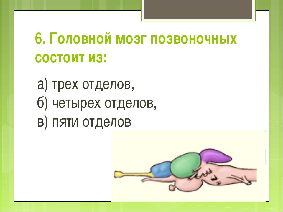 6. Головной мозг позвоночных состоит из: а) трех отделов, б) четырех...