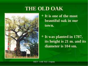 МБОУ СОШ №52 г.Кирова THE OLD OAK It is one of the most beautiful oak in our