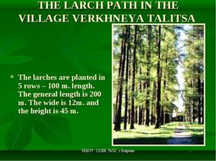 МБОУ СОШ №52 г.Кирова THE LARCH PATH IN THE VILLAGE VERKHNEYA TALITSA The lar