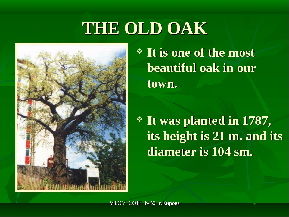 МБОУ СОШ №52 г.Кирова THE OLD OAK It is one of the most beautiful oak in our...