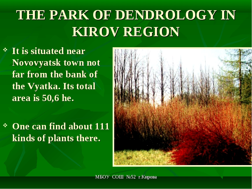 МБОУ СОШ №52 г.Кирова THE PARK OF DENDROLOGY IN KIROV REGION It is situated n...