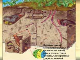 Почва состоит из твердых минеральных и органических частиц, воды и воздуха.