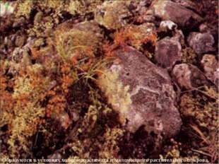 Образуются в условиях холодного климата и маломощного растительного покрова. 7