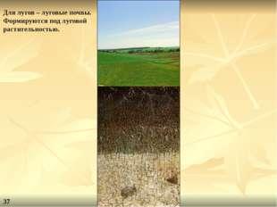 Для лугов – луговые почвы. Формируются под луговой растительностью. 37