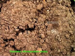 Типичные, обыкновенные почвы,