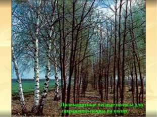 Полезащитные лесные полосы для сохранения почвы на полях.
