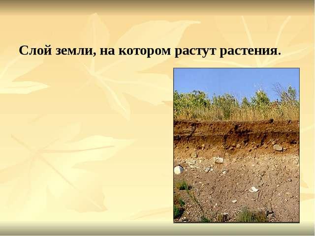 Слой земли, на котором растут растения.