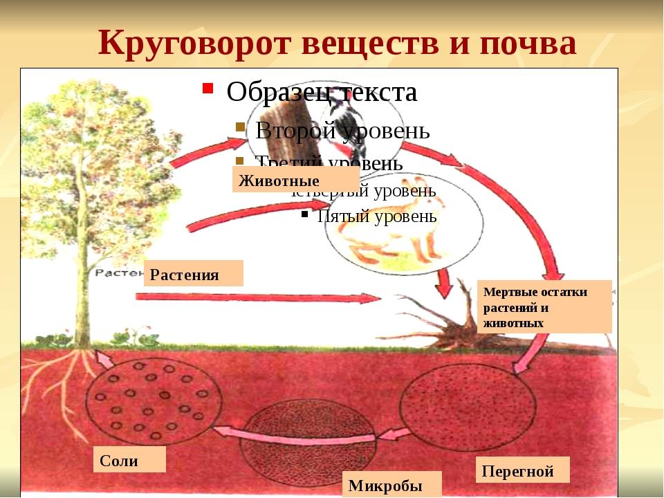 Круговорот веществ и почва Животные Растения Мертвые остатки растений и живот...