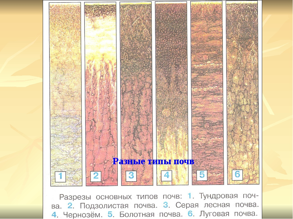 Разные типы почв