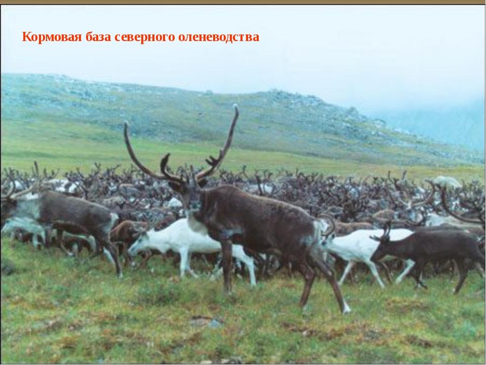 Кормовая база северного оленеводства