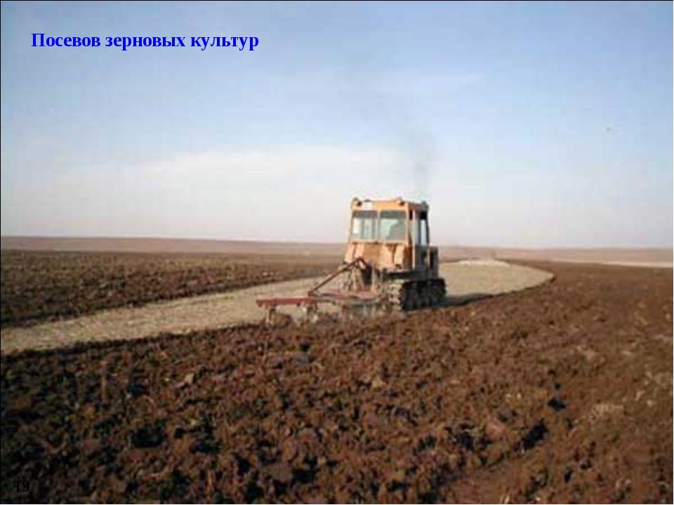 Посевов зерновых культур 19