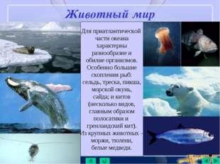 Животный мир Для приатлантической части океана характерны разнообразие и обил