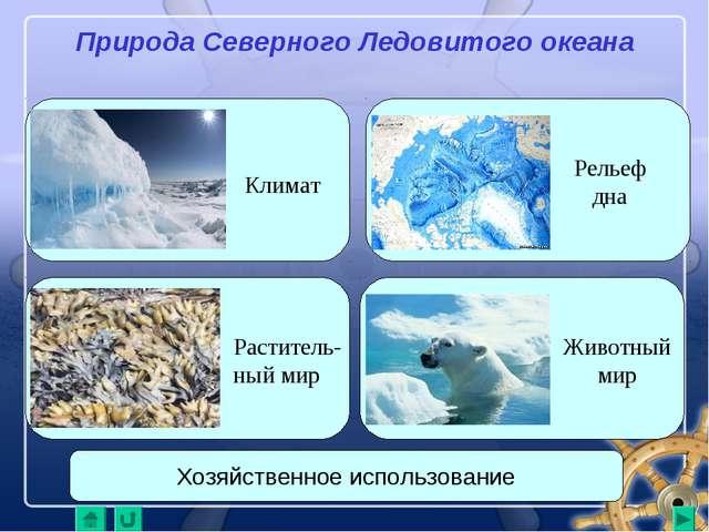 Природа Северного Ледовитого океана Климат Рельеф дна Животный мир Раститель-...
