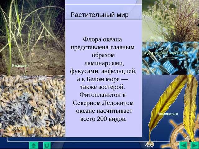 Растительный мир Флора океана представлена главным образом ламинариями, фукус...