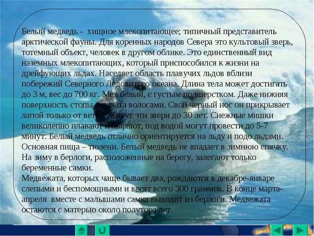Белый медведь - хищное млекопитающее; типичный представитель арктической фаун...